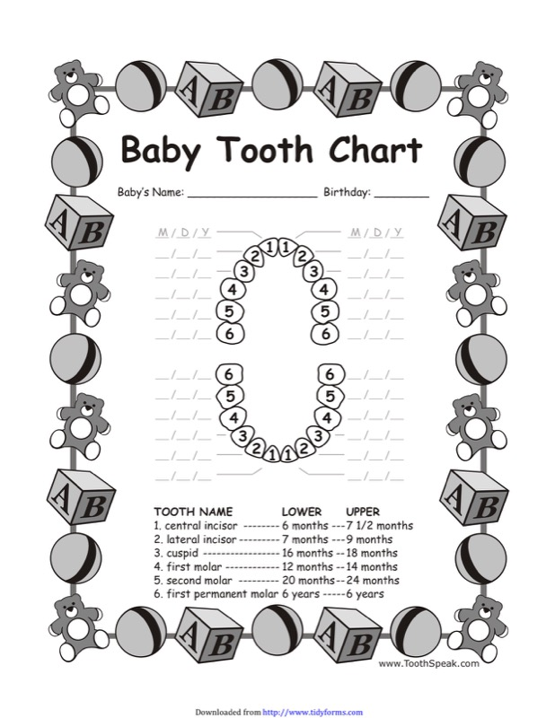 download baby teeth chart 3 for free